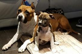 Abby & Gellie