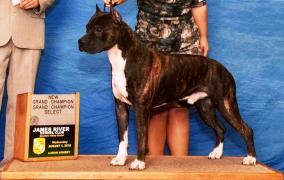 Gotti Grand Champion